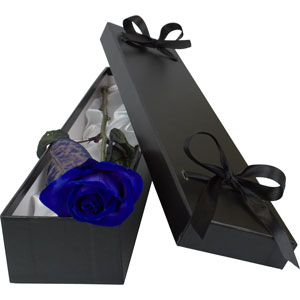 A Blue Rose in a silk lined gift box