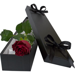 A Red Rose in a silk lined gift box